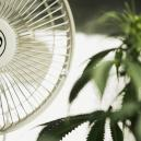 The Importance Of Airflow When Growing Cannabis