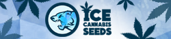 ICE Cannabis seeds - Official Zambeza Reseller