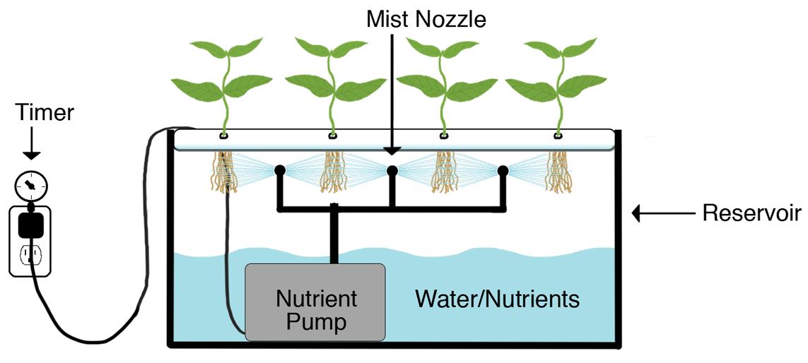 Cannabis coltivazione aeroponica