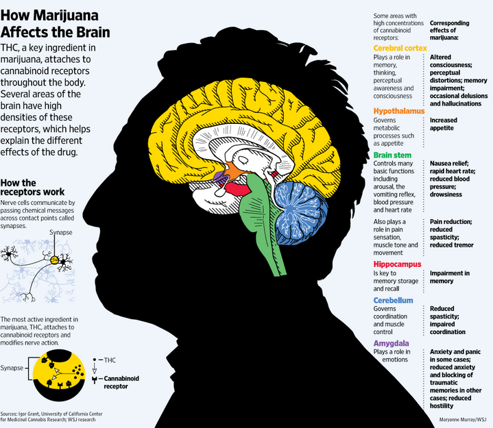 THC and the brain
