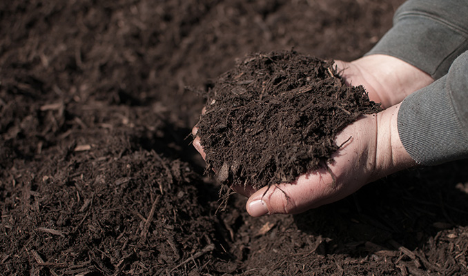 What Is Mulch And Why Is It Essential For Better Yields?