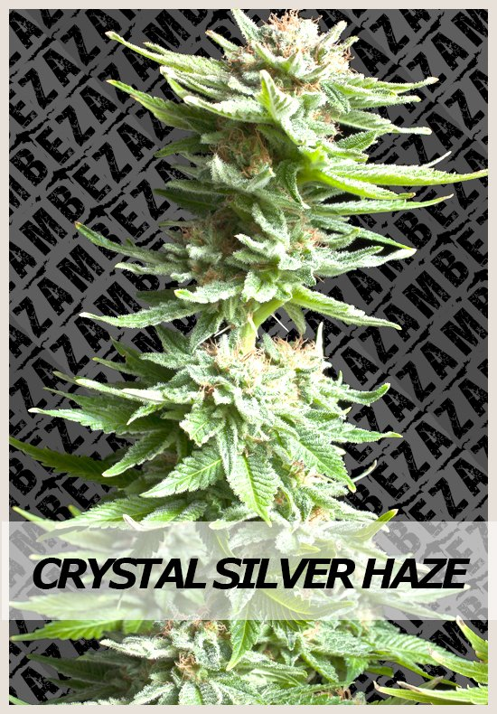 Crystal Silver Haze cannabis seeds