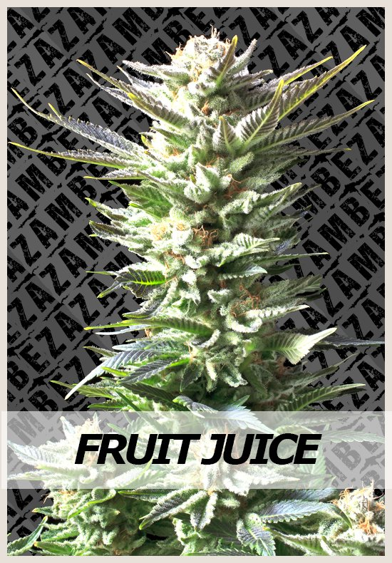 juice fruit cannabis seeds