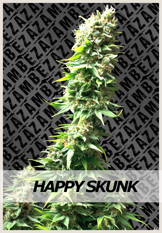 Happy Skunk cannabis seeds