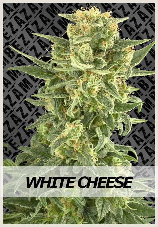 White Cheese  semi di canapa