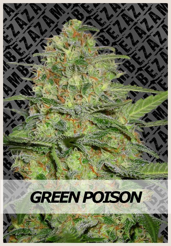 Green Poison Automatic cannabis seeds