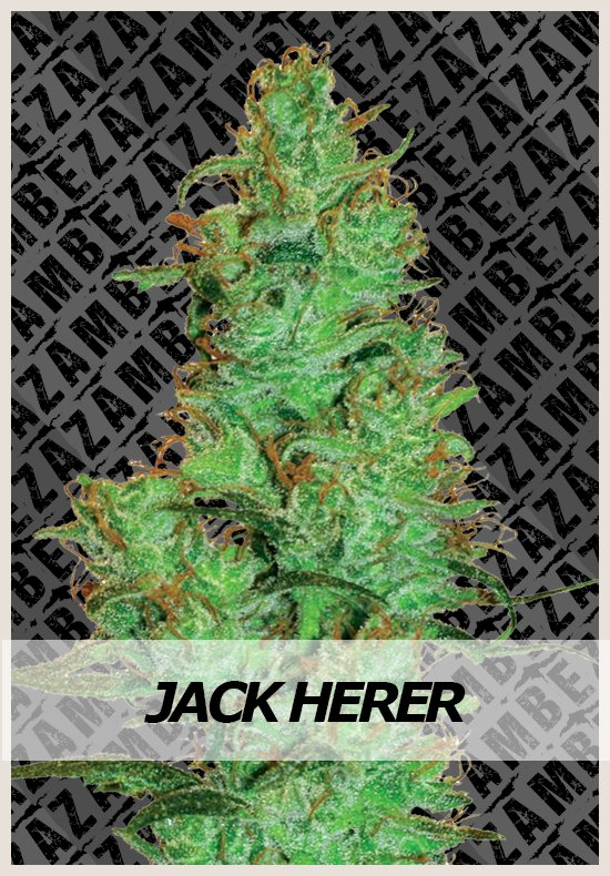 Jack Herer Automatic cannabis seeds