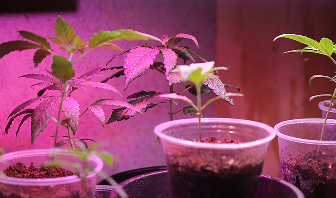 How And When To Transplant Your Seedlings