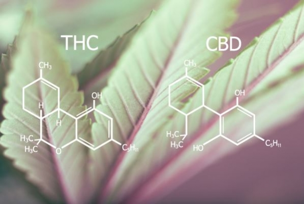 Why Is THC Psychoactive And CBD Is Not?