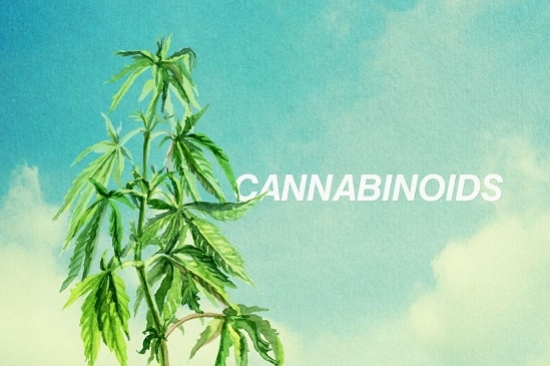 Cannabinoids 101: A Guide To The Basics