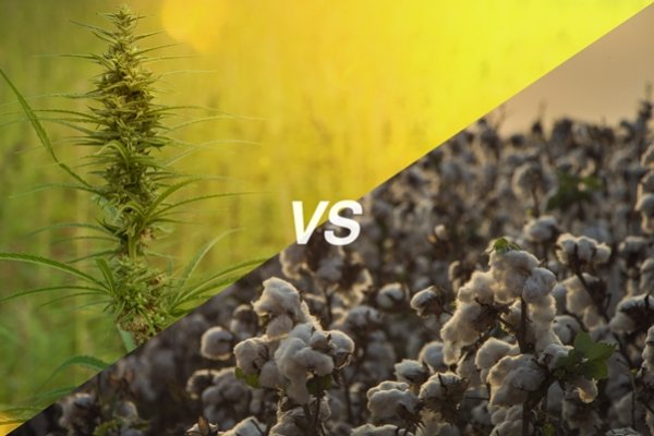 How Industrial Hemp Compares To Cotton As An Ecological Crop