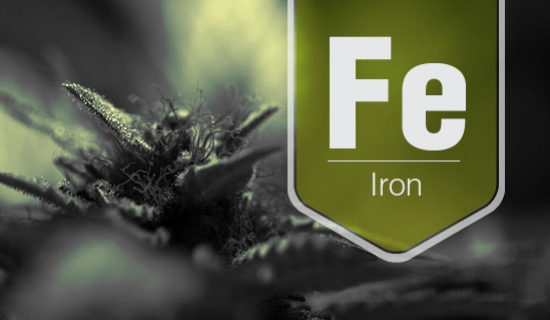 Iron Deficiency In Cannabis Plants
