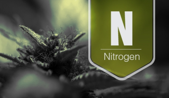 Nitrogen Toxicity & The Cannabis Plant