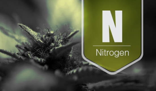 Nitrogen Deficiency In The Cannabis Plant