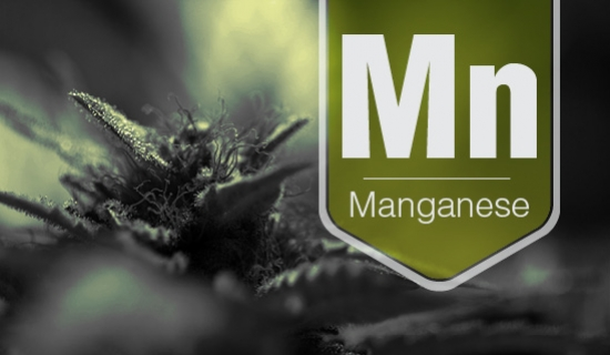 How To Identify And Treat Manganese Deficiency In Your Cannabis Crop