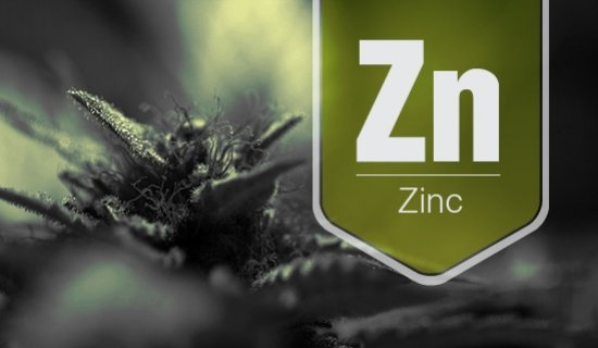 Zinc Deficiency - A Nutrient Shortage In Your Cannabis Plant