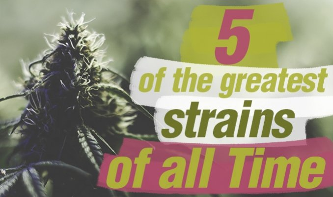 Five Of The Best Cannabis Strains Of All Time