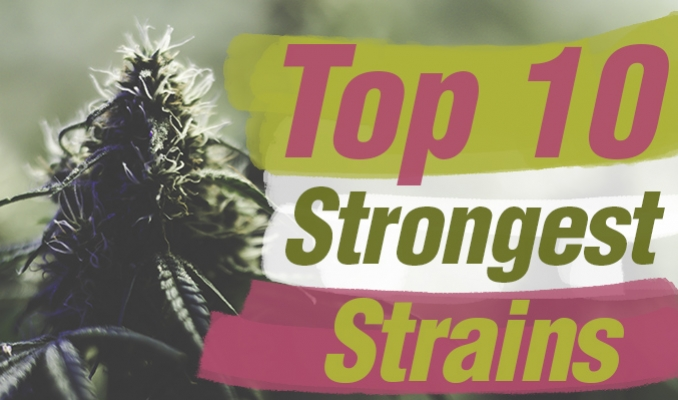 Zambeza's Top 10 Strongest Strains
