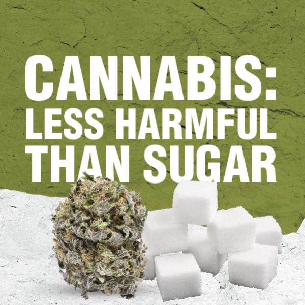 Cannabis Is Less Harmful Than Sugar