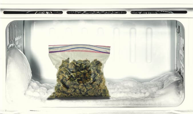 Should You Freeze Your Cannabis?