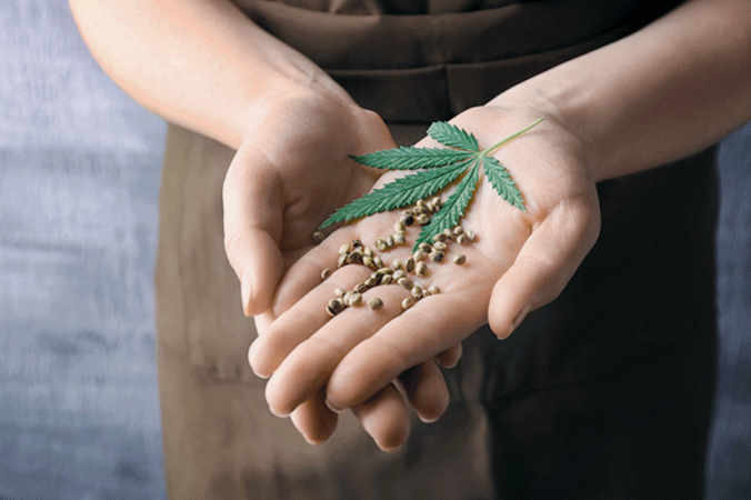 How To Test The Quality Of Cannabis Seeds