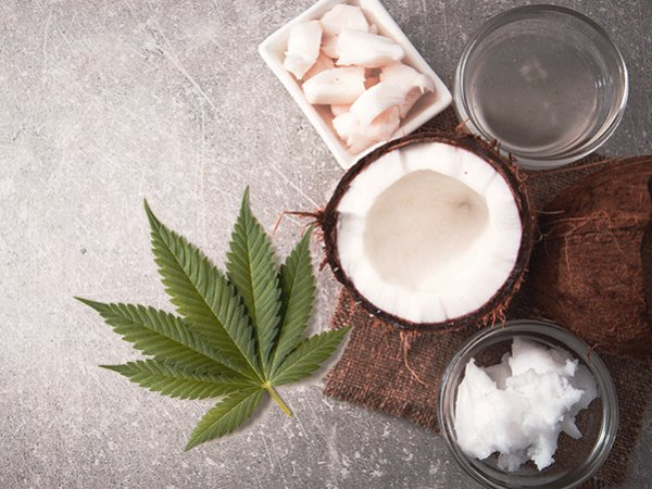 How To Make Cannabis Coconut Oil At Home