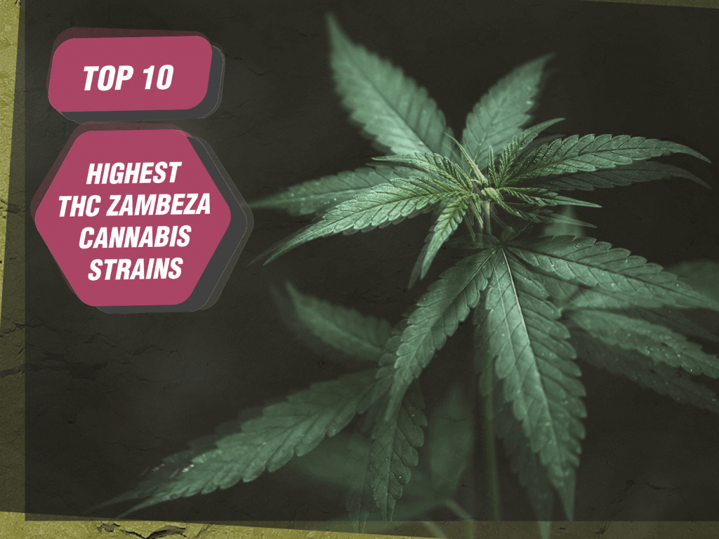 Top 10 Highest-THC Zambeza Cannabis Strains