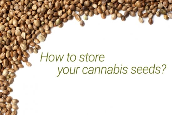The best ways to store your cannabis seeds