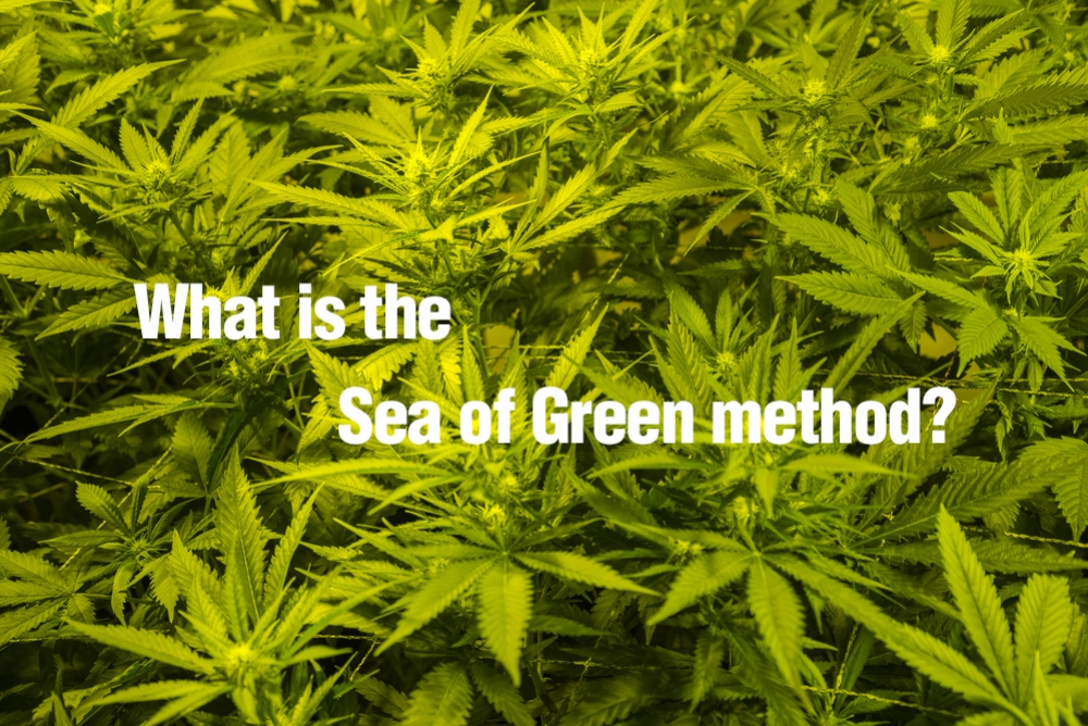 What is the Sea of Green method?