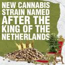 New Cannabis Strain Named After The King of the Netherlands