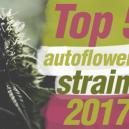 Top 5 Autoflowering Cannabis Strains Of 2017