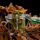 A Guide On Properly Drying And Curing Your Cannabis Flower