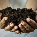 Homemade Organic Fertiliser: How Is It Made?