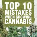 Top 10 Mistakes When Growing Cannabis And How To Avoid Them