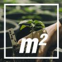 How Many Cannabis Plants Per Square Metre?
