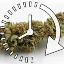 How To Dry Your Fresh Cannabis Buds Quickly
