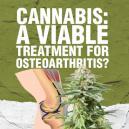 Cannabis: A Viable Treatment For Osteoarthritis?