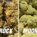 Moonrocks Vs Sunrocks - Too Potent?