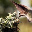 How To Stop Birds From Hanging Around Your Cannabis Plants