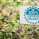 Organic Pest Control Methods For Cannabis Plants