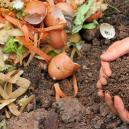 Cannabis and Homemade Compost: How to Make, Store, and Use I