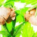Top 10 Reasons For Slow Cannabis Growth