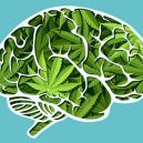How Cannabis Affects Your Brain