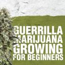 Guerilla Marijuana Growing for Beginners