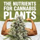 The nutrients for cannabis plants