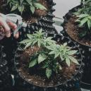 How To Choose The Right Pots For Your Cannabis Plants
