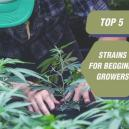 Top 5 Strains For Beginner Growers