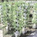 What Is Vertical Growing And How Does It Increase Yield?