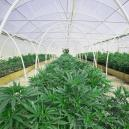 Grow Weed Easily And Successfully By Building A Greenhouse