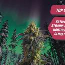 5 Best Sativa Strains For Northern Weather